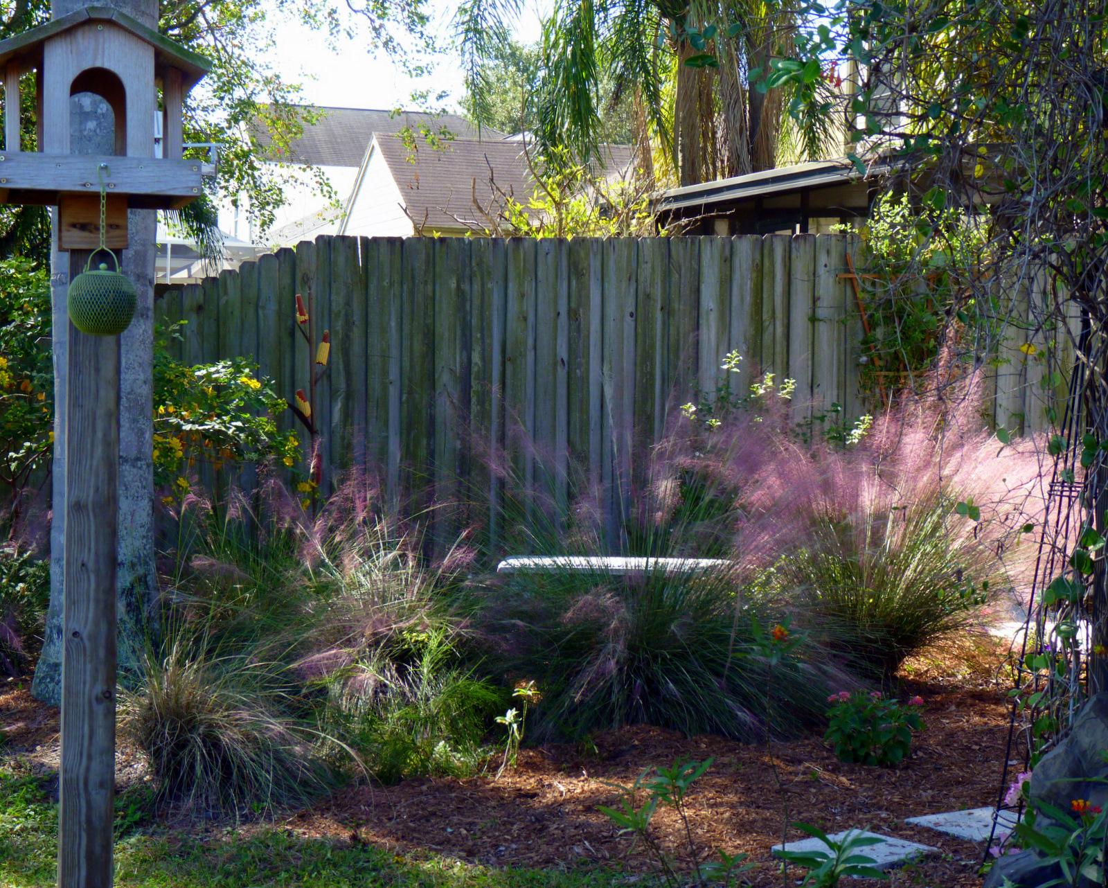 my florida backyard purple and gold