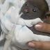Primera cría de araguato nace en el Zoológico Bararida