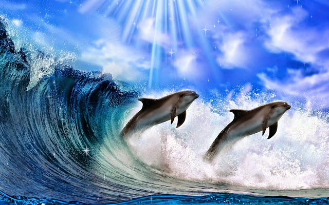 Dolphin hd wallpapers earth blog tags dolphin hd wallpapers dolphin dolphin hd dolphin wallpapers dolphin free download free download wallpapers dolphin images dolphin pictures voltagebd Image collections