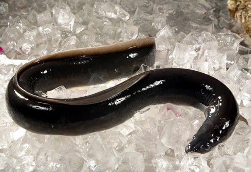 Ishra eel