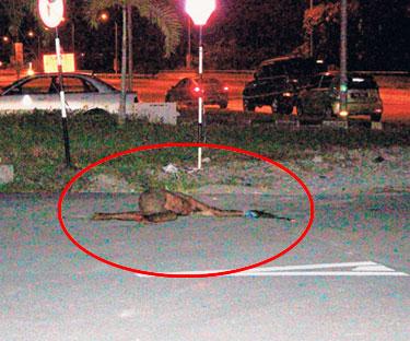 Meena Kumar dijumpai mati, gambar mayat Meena Kumar, Meena Kumar maut ditikam, pemandu trak ditikam, pemandu trak mati dibunuh, mayat dicampak tempat lain, kena bunuh, kena tikam, pemandu trak ditikam dibunuh