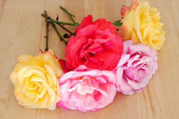 Choose organic roses to make rose water