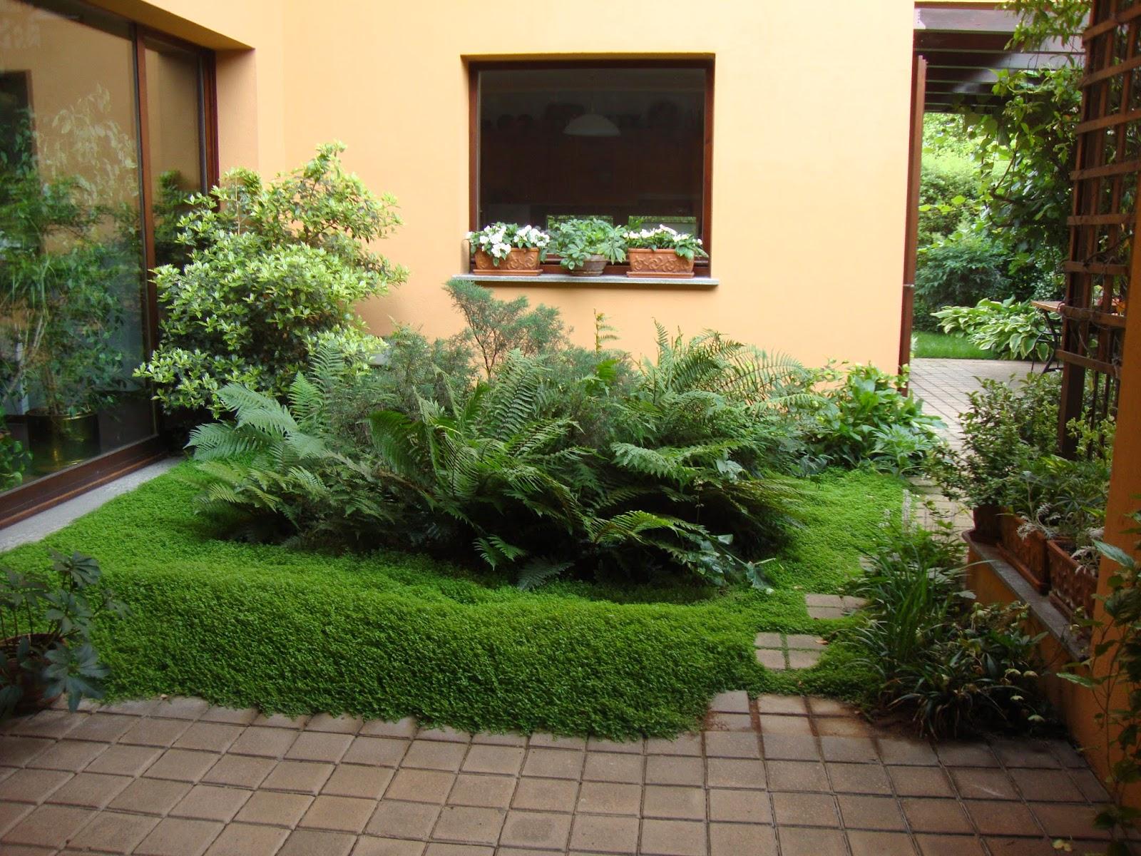 Un piccolo giardino in città bentornati nel mio giardino