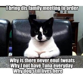 Tuxedo cat calls a meeting
