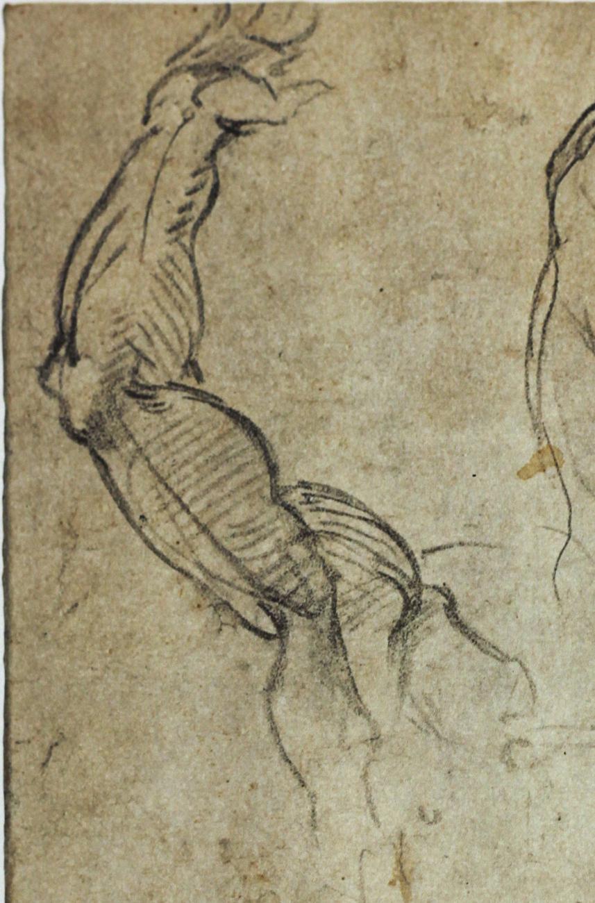 Michelangelo anatomy sketches 8436444 - follow4more.info