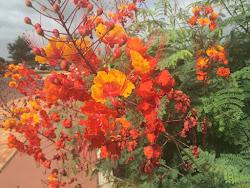 Love the Orange colors