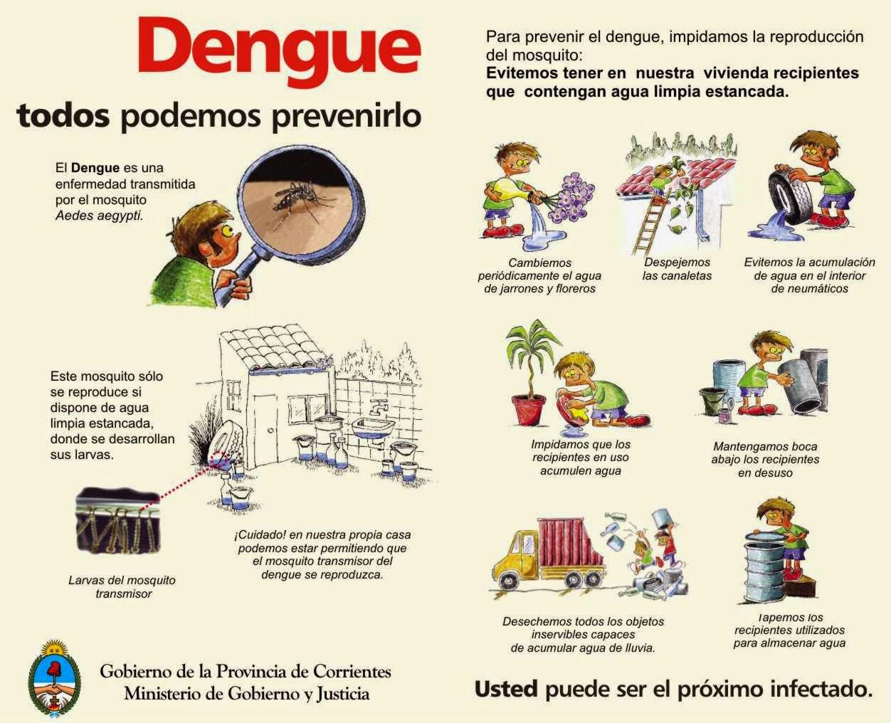 MOSQUITOS: Imágenes del mosquito del dengue