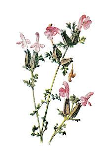 stock flower image