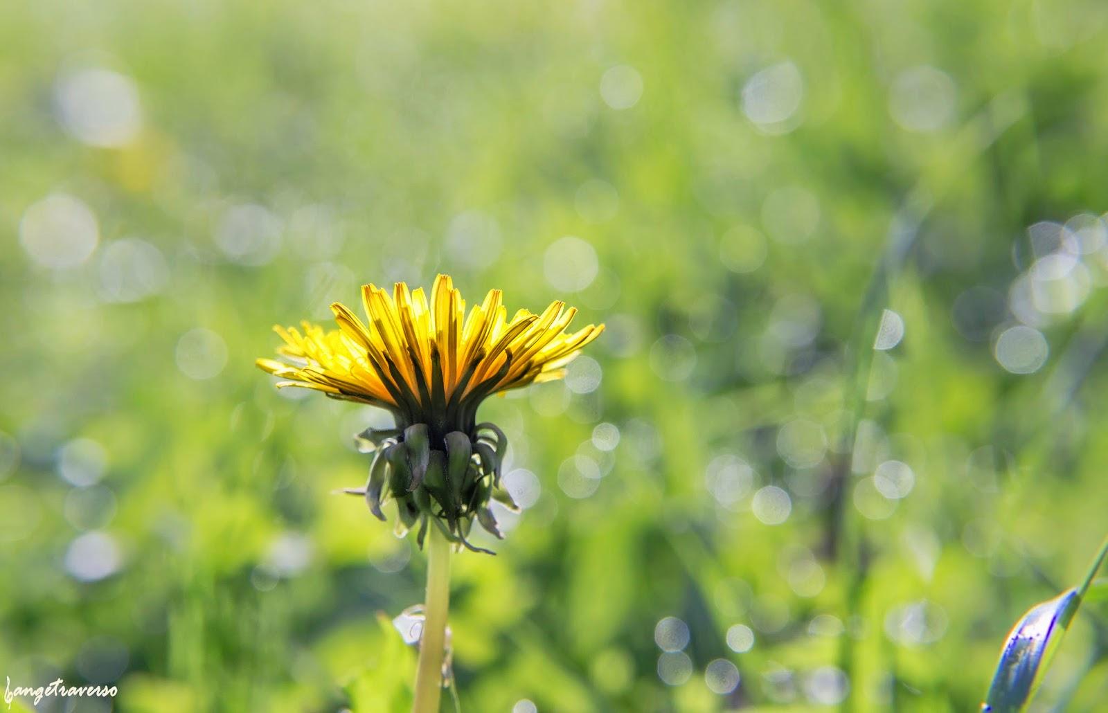 Nature en Haute-Savoie