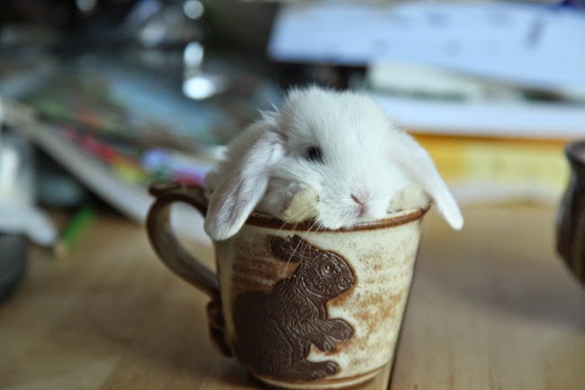 http://dailybunny.org/2013/08/06/lucky-humans-bunny-mug-comes-with-a-real-bunny/