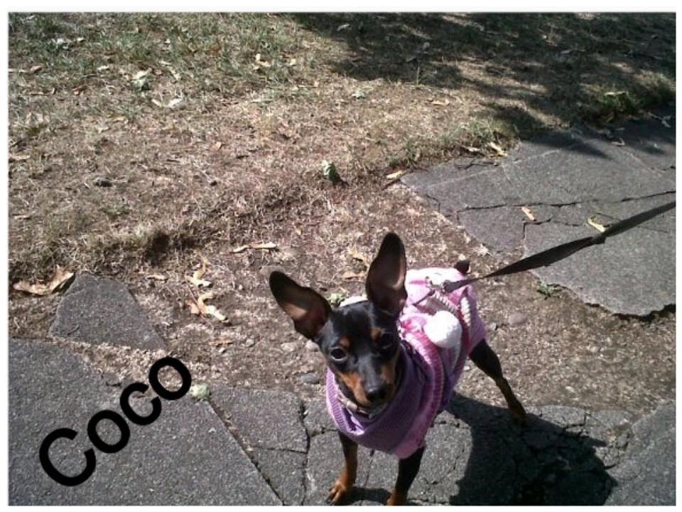 Coco - Pet dog building confidence