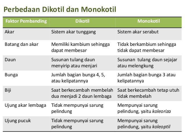Ciri Dan Perbedaan Tumbuhan Monokotil Dan Dikotil Terlengkap Markijar Com
