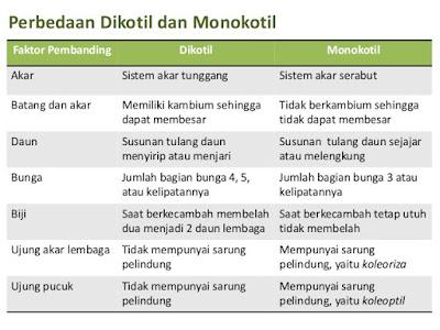 Perbedaan dikotil monokotil