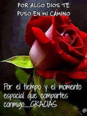 rosas-de-amor_por-algo-dios-te-puso