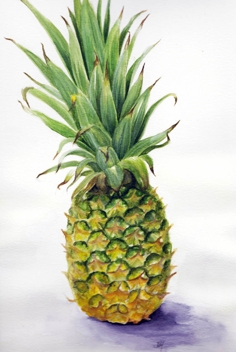 realistic pineapple drawing. pineapple realistic drawing a