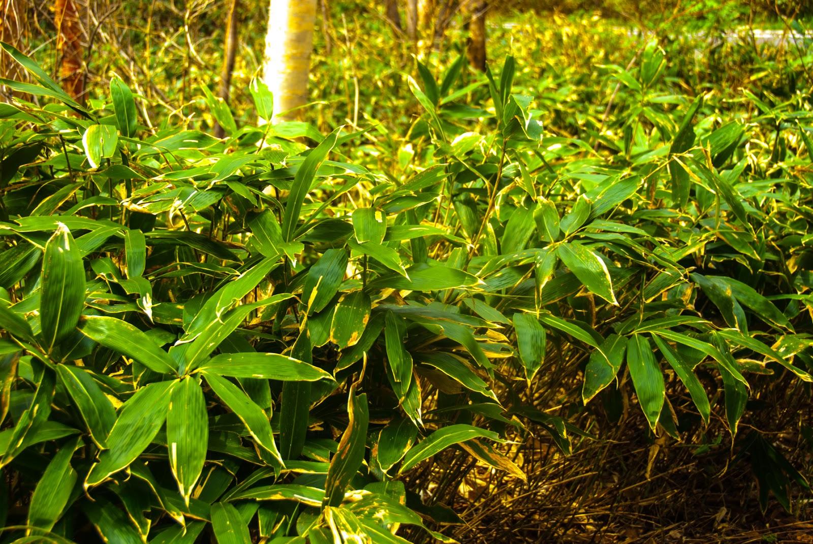 緑色の草がたくさん生えている