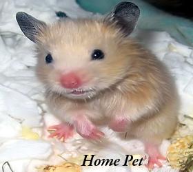 Feeding Hamster