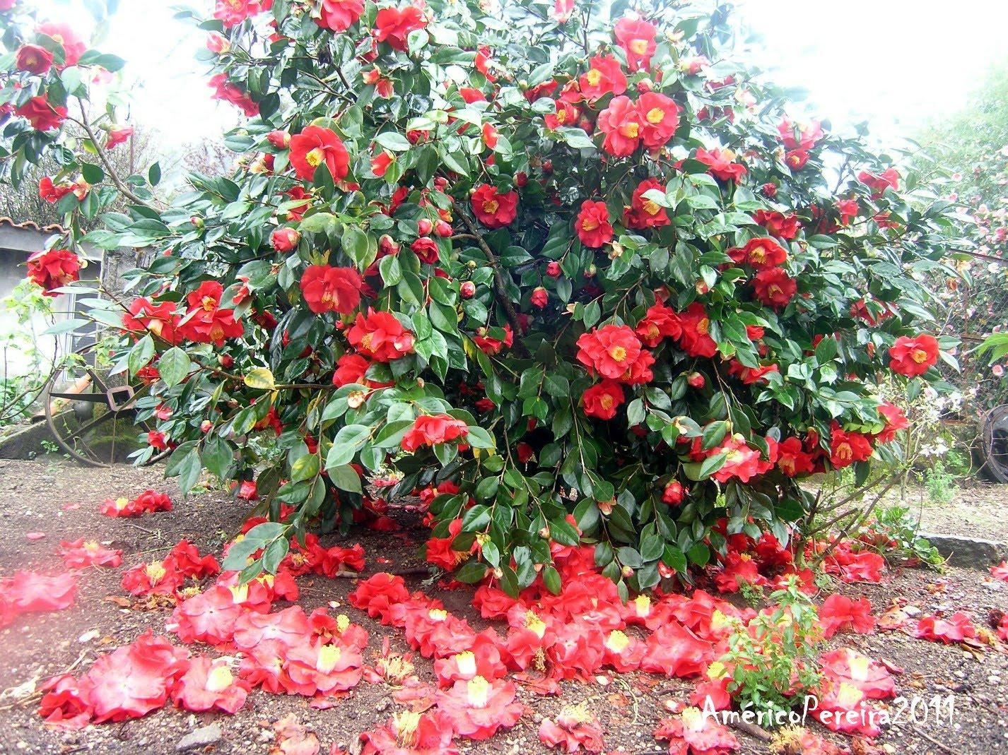tapetes de flores naturais resultado da queda das suas flores mais