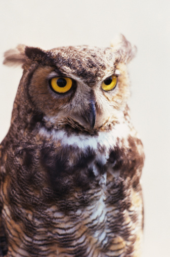 Go on the Prowl for Owls During Nature Hikes at Five Michigan State Parks