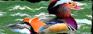 Une photo de couverture facebook personnalisée d'un oiseau
