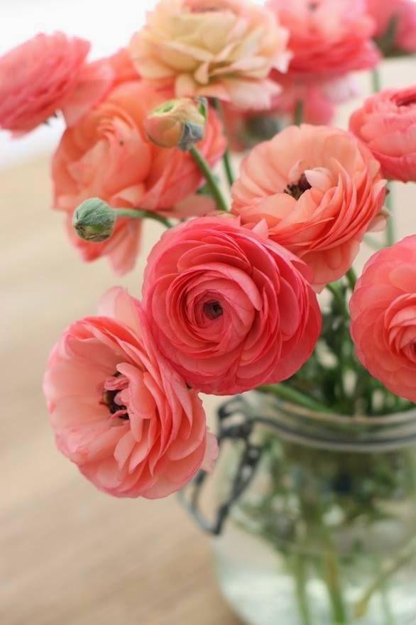 Para alegrarme el día, mis flores preferidas...