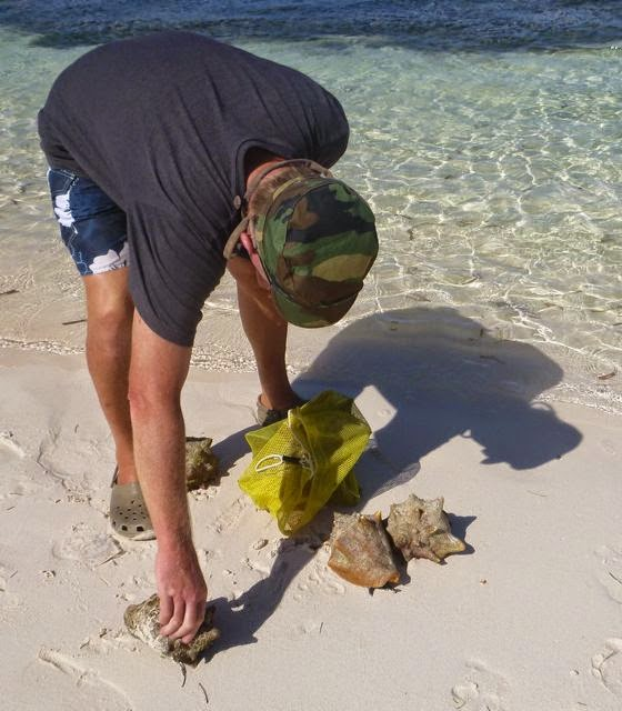conch harvesting hog cay ragged islands bahamas