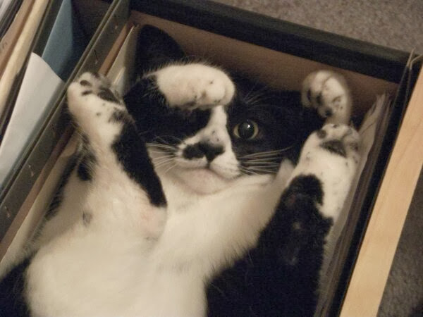 Funny cats - part 83 (40 pics + 10 gifs), cat pics, cat sits in box in awkward position