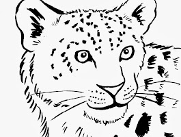 Snow Leopard Colouring Pages