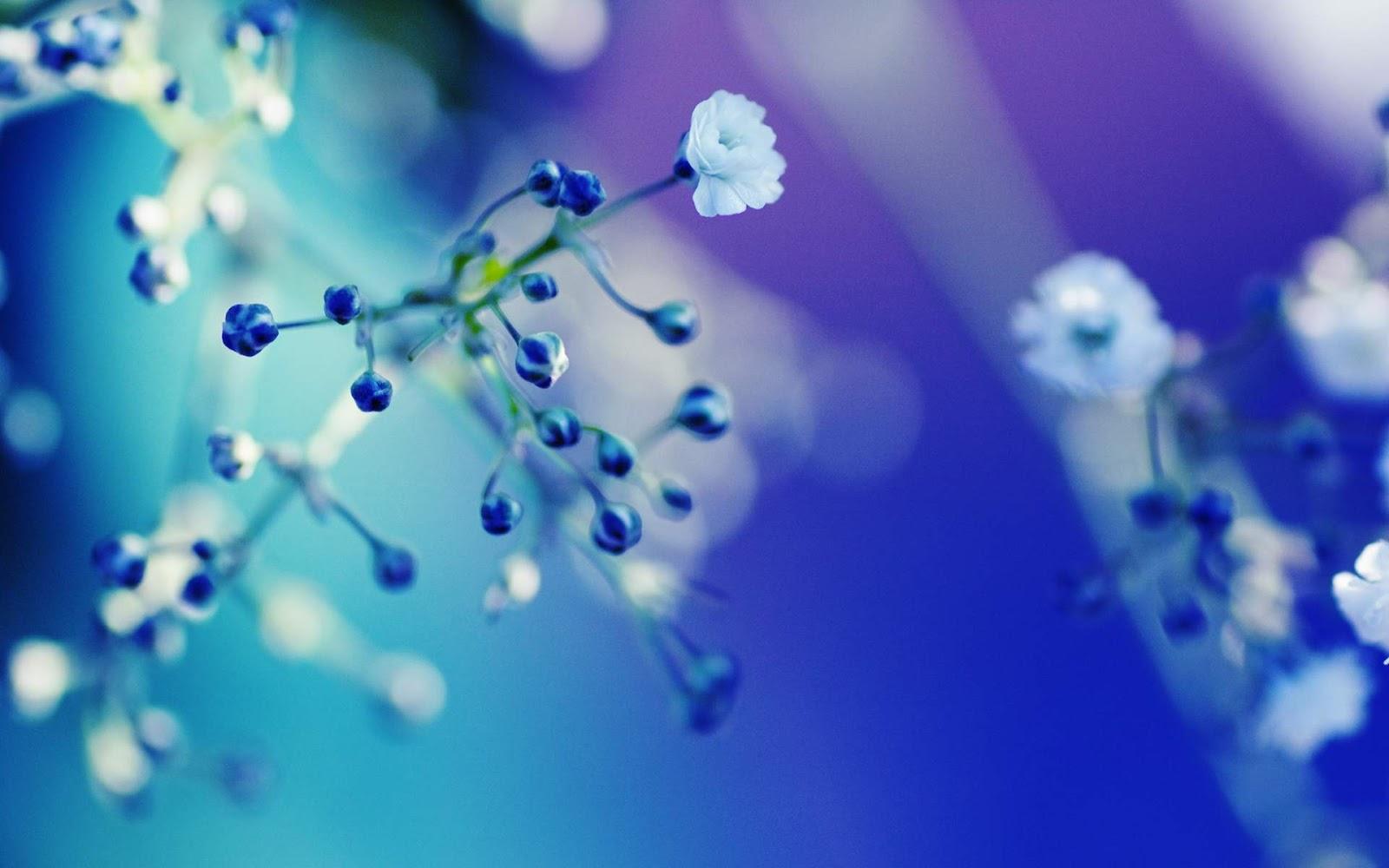 Blue Flower Wallpaper Early Flower