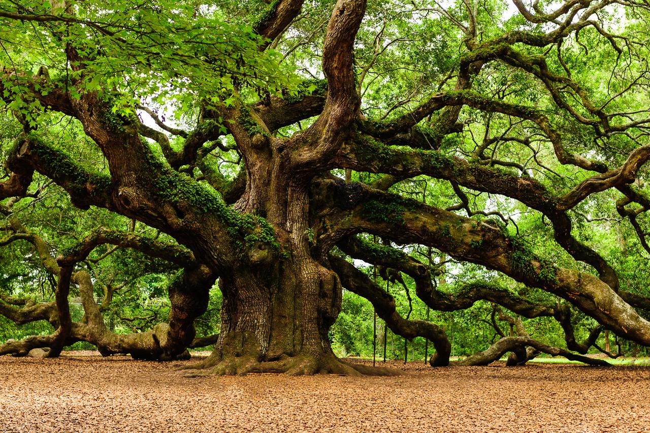10 października - Dzień Drzewa