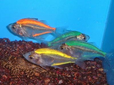 Cm Glass Fish Tank Bundaberg Au