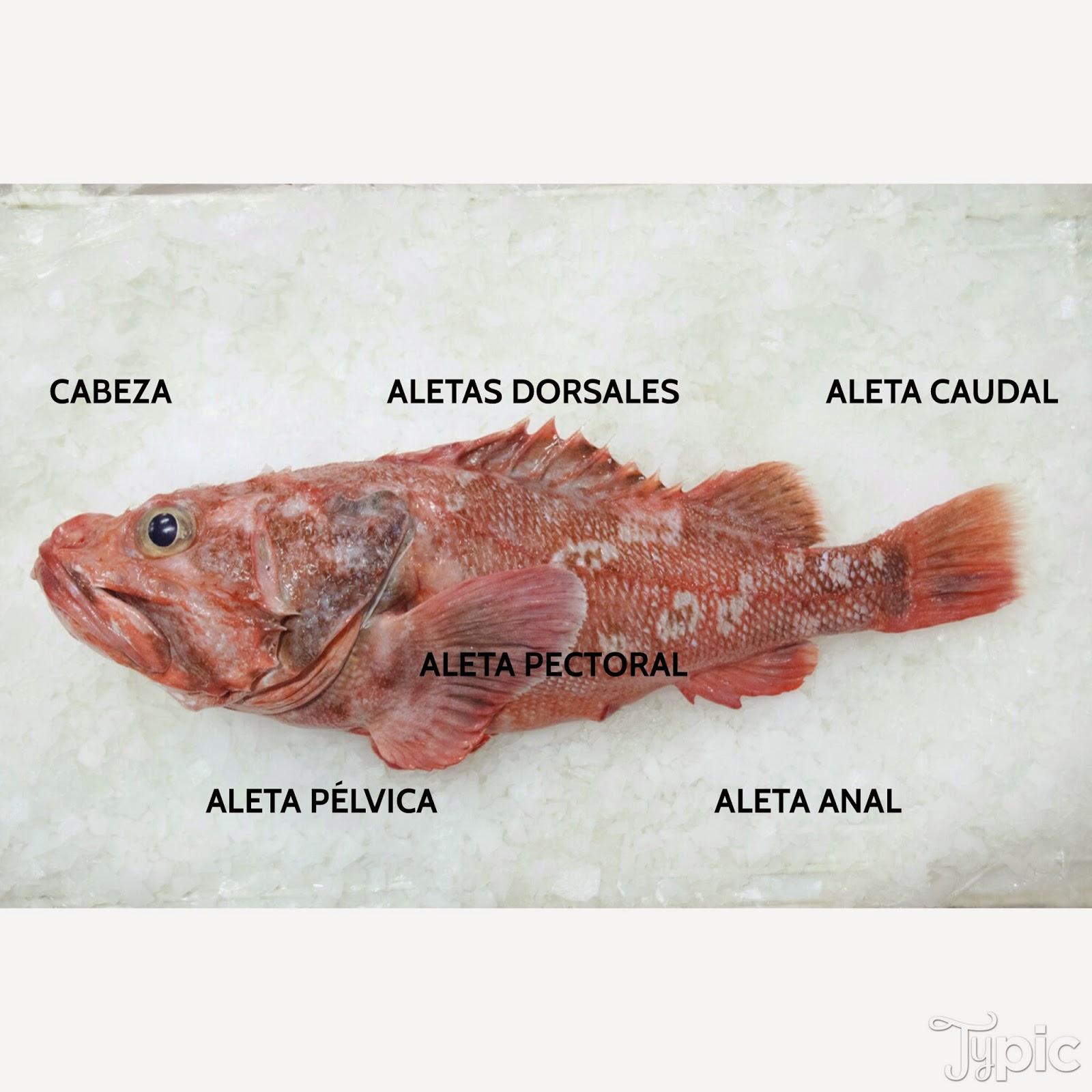 Las partes del pescado | Rías Atlánticas Blog