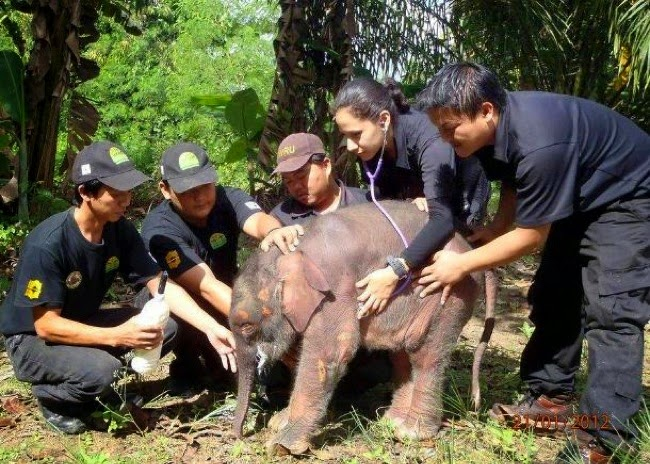 #3. A baby elephant got a thorough medical check up thanks to these guys. - 24 Happy Animal Photos Made Possible By The People Who Saved Them.