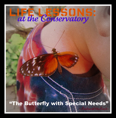 photo of: butterfly with special needs
