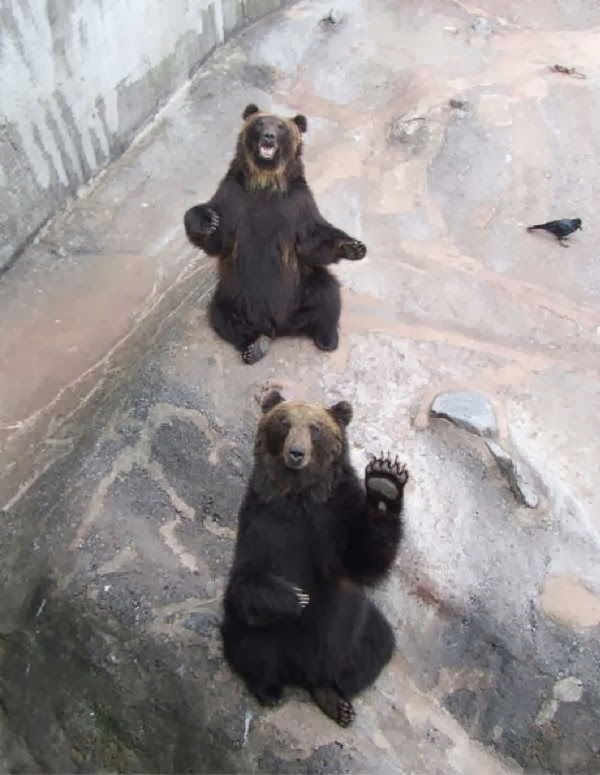 Funny animals of the week - 10 January 2014 (35 pics), waving bear picture