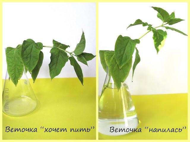 опыты с растениями для детей
