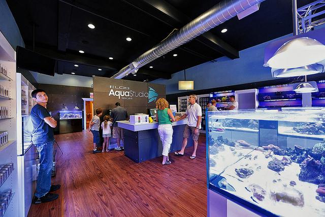 Студия аквариумного дизайна