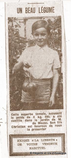 Tomate de 880 grammes à Mozac, Auvergne en 1960.