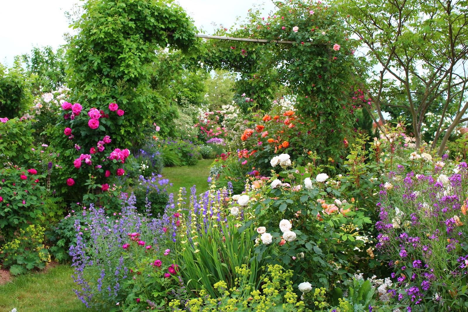 Roses du jardin ch neland rosier boule de neige for Jardin roses