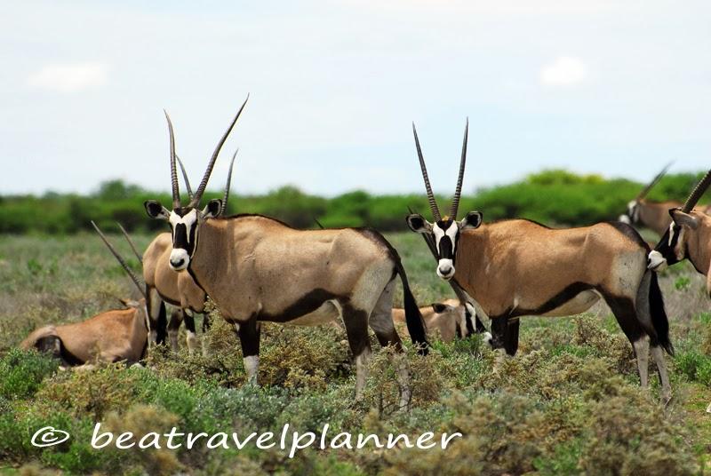 Antilope all'Etosha National Park