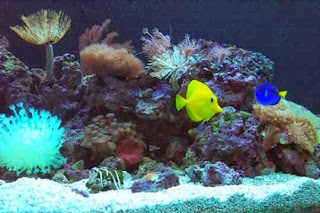 Easy Methods to Eliminate Cloudiness in Aquariums and Fish Ponds