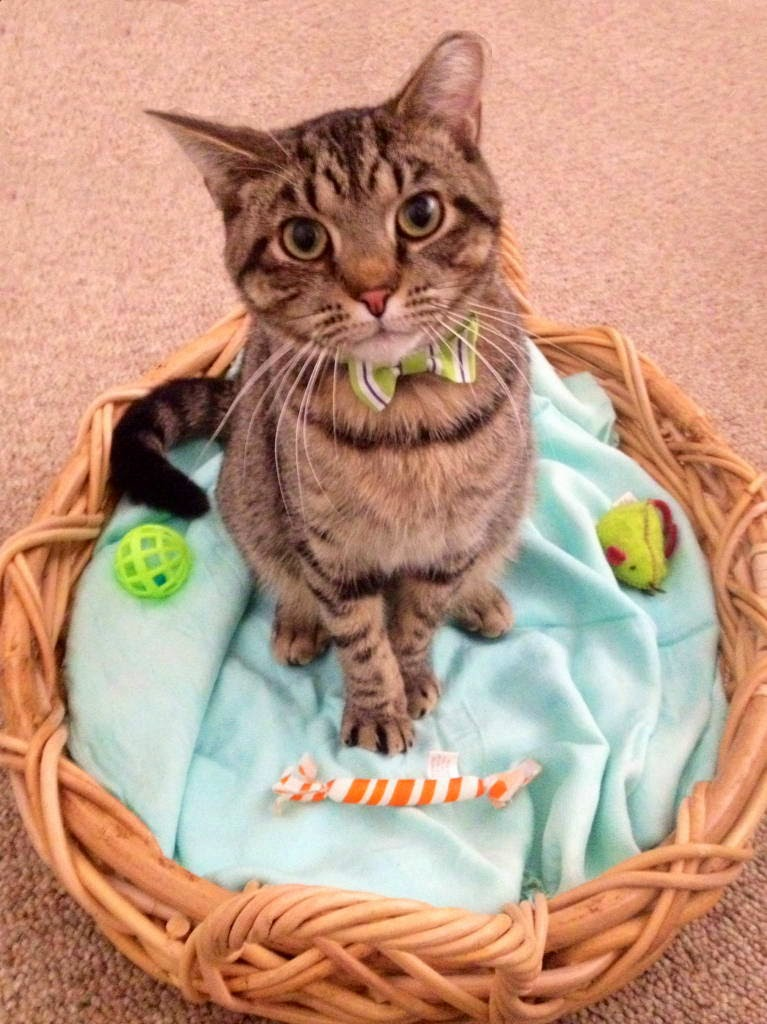 Funny cats - part 103 (40 pics + 10 gifs) | Amazing Creatures