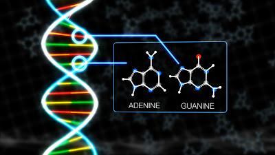 meteorite_DNA