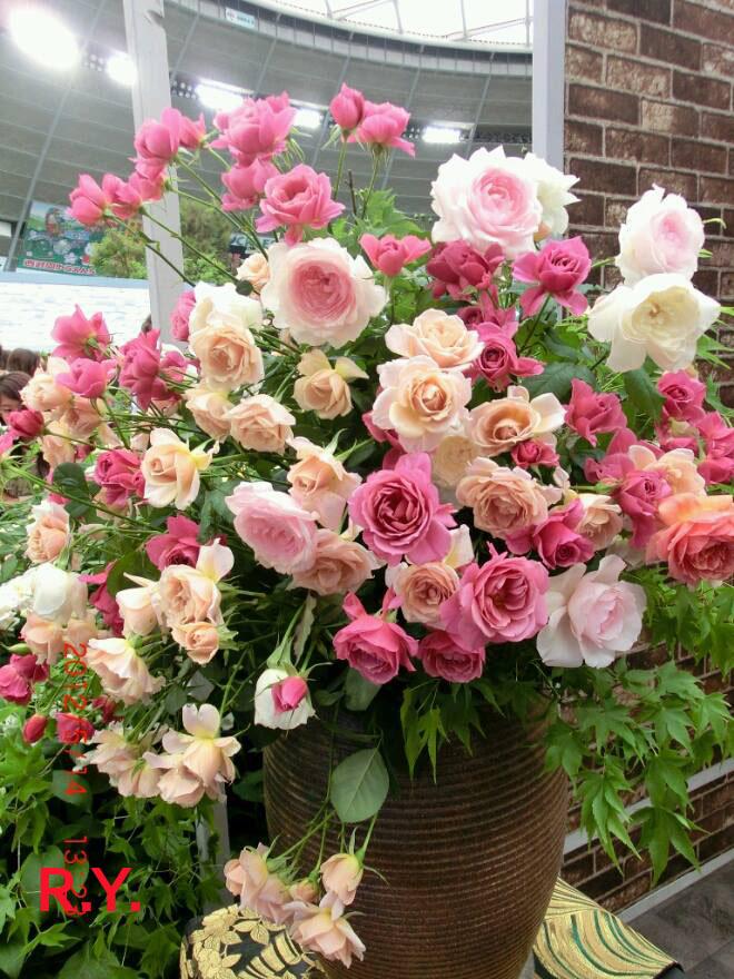 Beautiful views around the world beautiful coloured roses