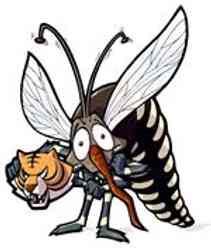 Come difendersi dalle zanzare tigri, rimedi naturali, metodi naturali ecologici, consigli e trucchi