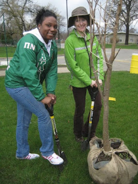 Tree planting on campus