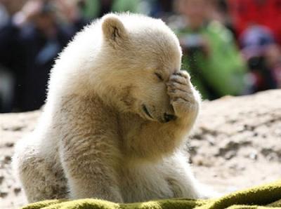 Cute Bear 2012