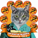 Cat Scout Gracie