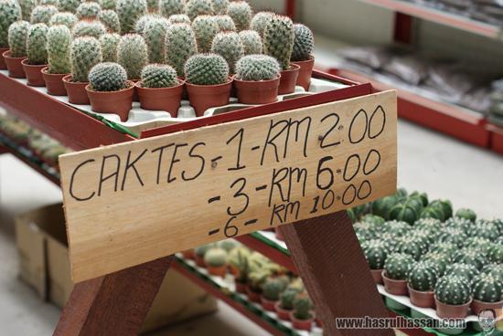 Cameron Highlands Cactus Price