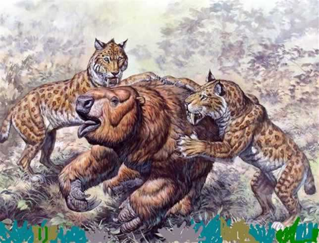 What Do Saber Tooth Cats Eat